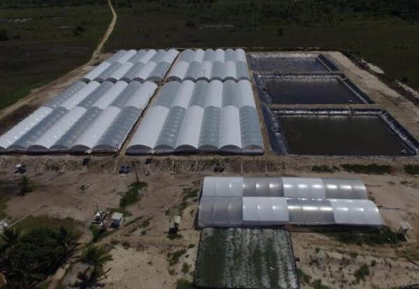 Benefícios do Reservatório de Geomembrana para Carcinicultura